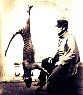 captured thylacine