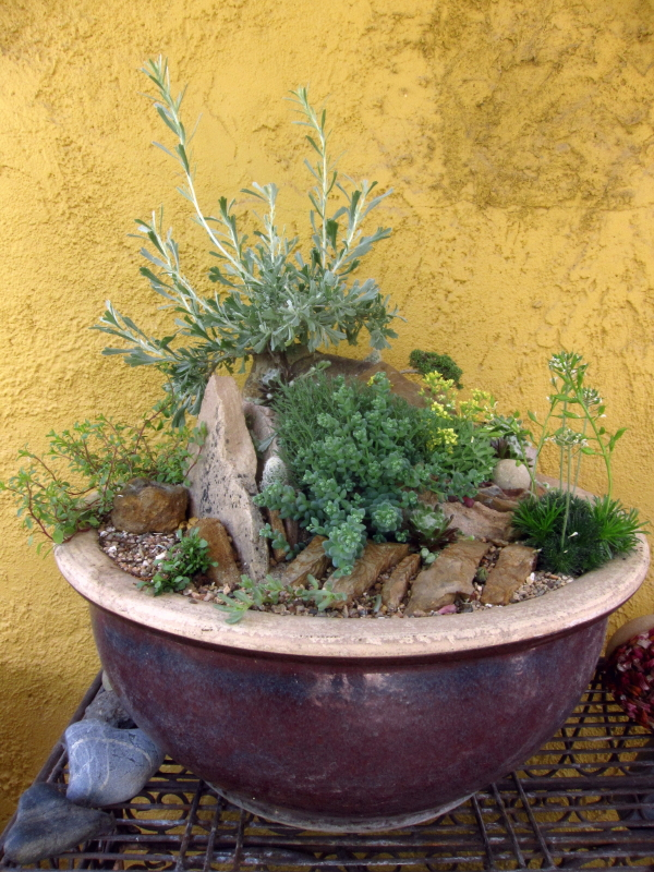 How To: Crevice Garden In A Pot