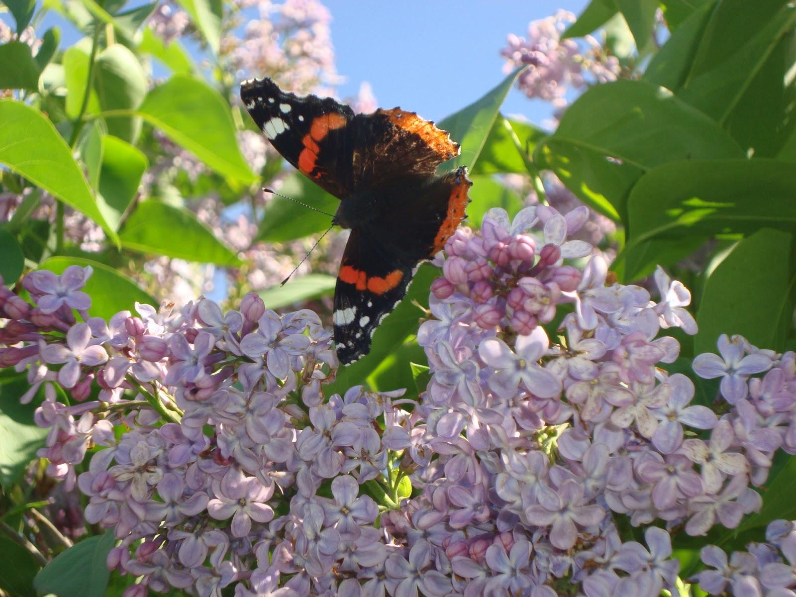 Floresamatxo todo sobre las flores consejos para cuidar for Jardin lilo