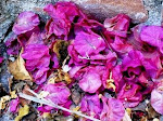 Beautiful Rose Petals