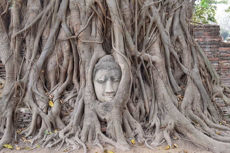 Wat Phra Mahathat, temple, boudda dans l'arbre, Ayutthaya, Thailande