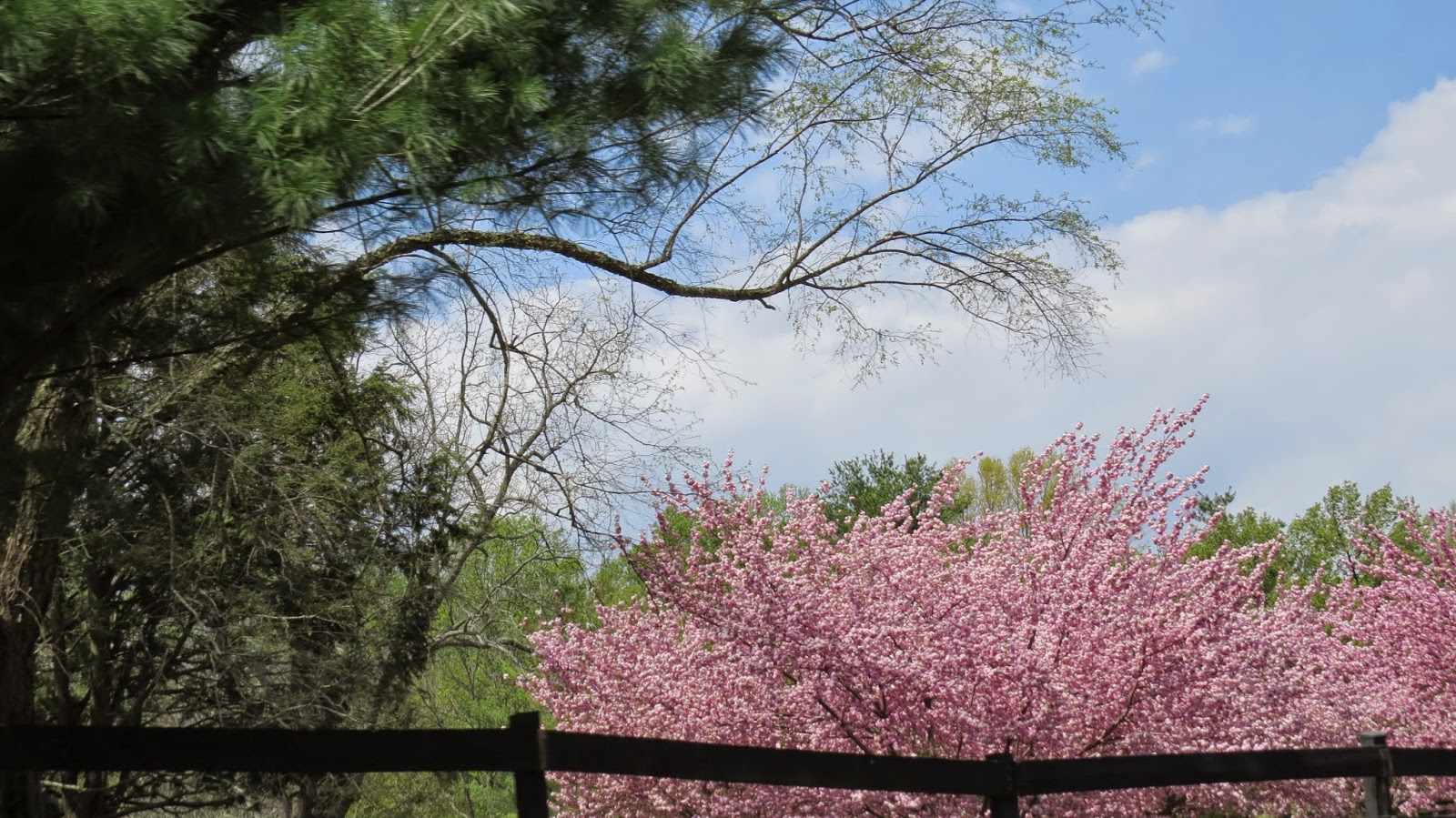 Springtime-in-Northern-Virginia's-Countryside