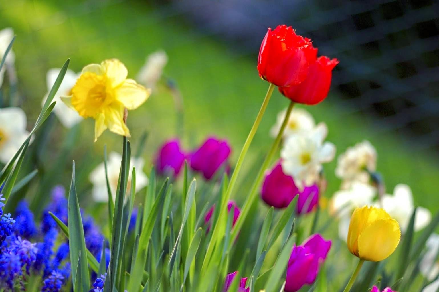 Spring flowers pictures spring flowers pictures spring flowers pictures and names mightylinksfo