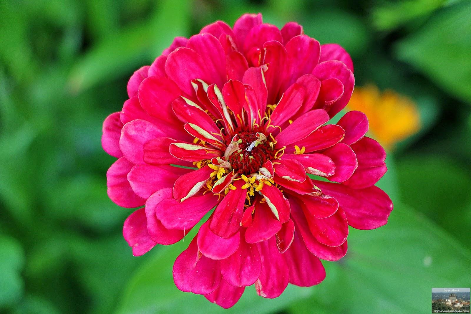 LAS 100 FLORES MÁS BELLAS Mi Jardín - Imagenes De Flores Blancas Y Rojas