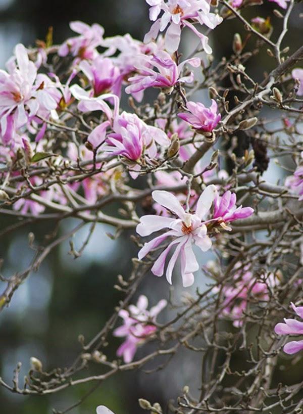 Estilo n rdico para el jard n un vivero en suecia guia for Vivero las magnolias