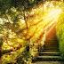 5 Formas de Recorrer el Camino de la Luz: Tu Guía Rápida Espiritual
