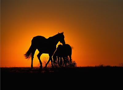 Linda pareja de caballos en un romantico atardecer