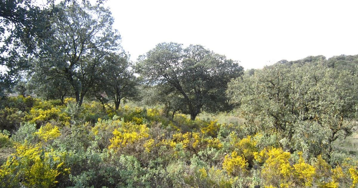 Geograf a historia san mart n 3 paisajes clima for Arboles de hoja perenne para clima mediterraneo