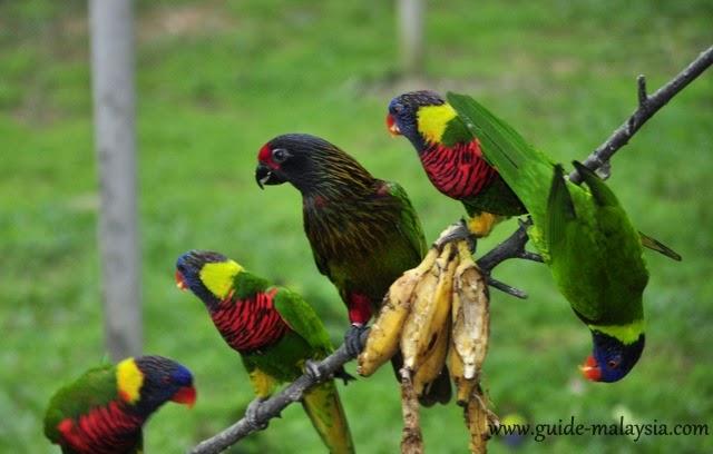 حديقة طيور كوالالمبور... فرصتك لمشاهدة