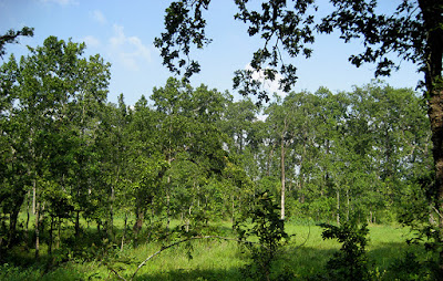 Forest in Bis Hajari Taal Area