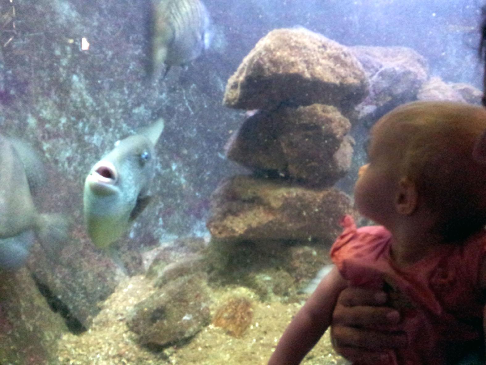 et sa f 233 e des etincelles quand l aquarium de canet en roussillon prend l eau