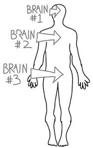 Cerebro Trinitario...