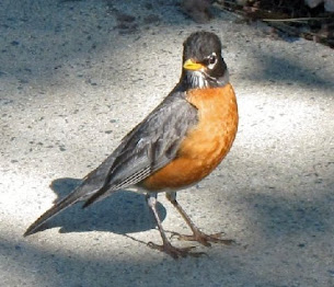 """""""So what if I'm a crabby Robin..."""