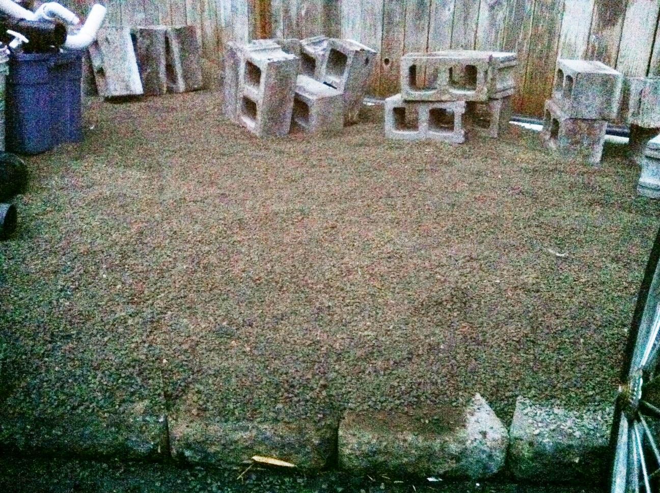 triyae com u003d dog friendly backyard ground cover various design