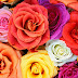 Meaning of Different Colors of Roses