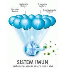 Memperkuat Sistem Imun.