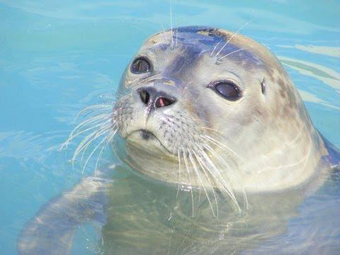 Lincolnshire Mums: Natureland Seal Sanctuary