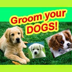 Groomy Dogs