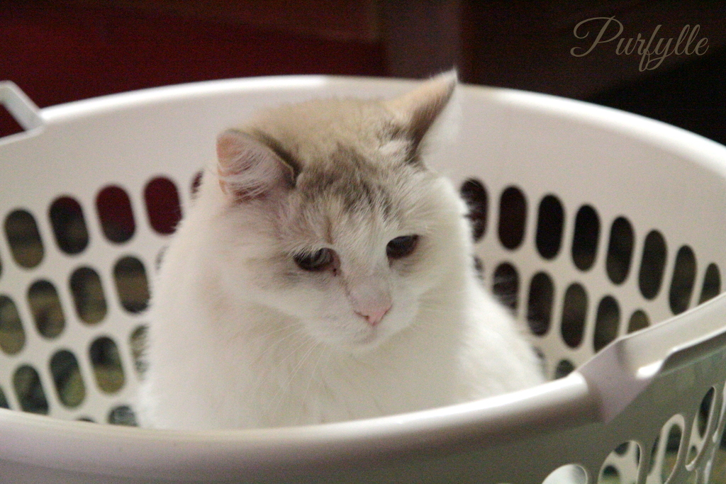 Fluffy planning how much fluff to leave in the basket