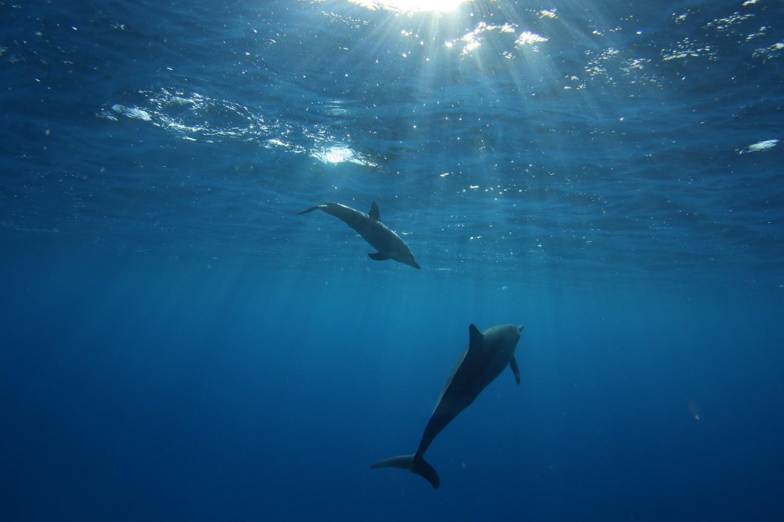 イルカの画像 p1_16