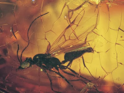 http://sciencythoughts.blogspot.co.uk/2013/12/a-new-species-of-ant-from-late-eocene.html
