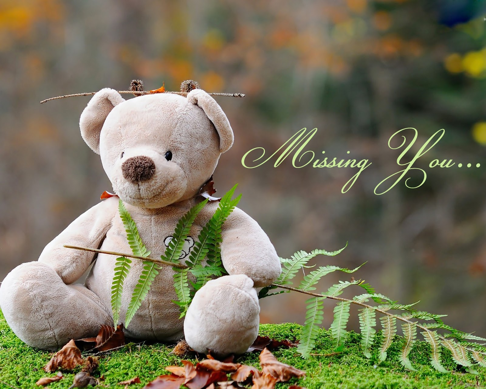 Miss You Teddy Bear Image HD