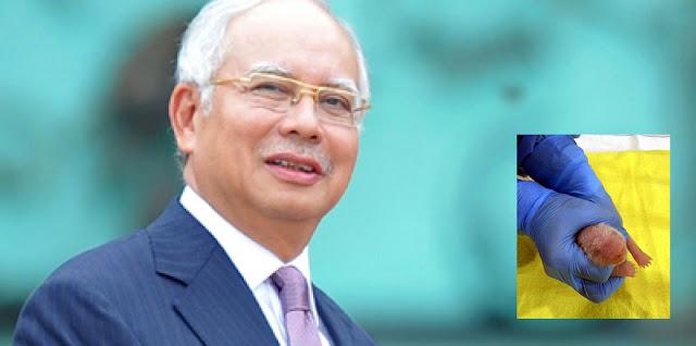 (3 Gambar) Najib Razak Muat Naik Gambar Anak Panda, Puji Kecomelan Menambat Hati Rakyat Malaysia