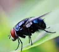 cara-mengusir-lalat