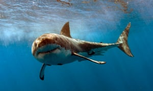 The Left Shark Bog