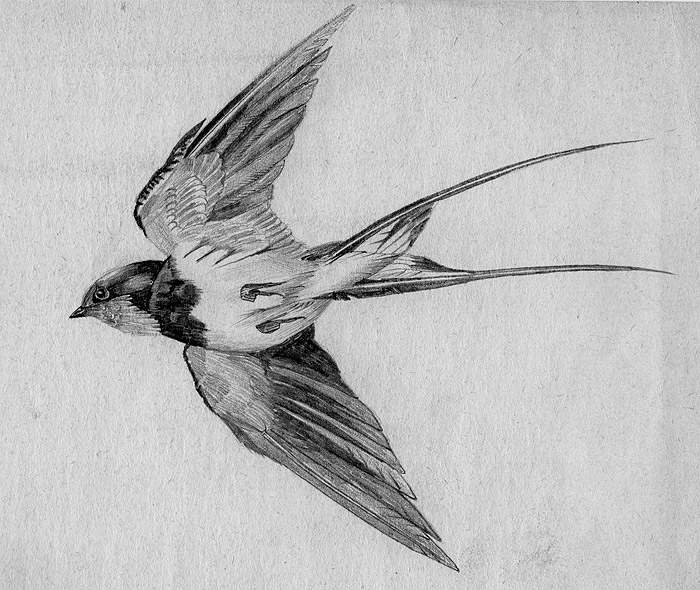 how to get bird off shoulder ark