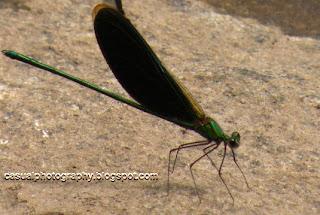 Flies - Masinagudi