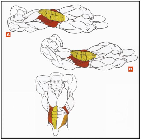 Как накачать все мышцы живота в домашних условиях 24