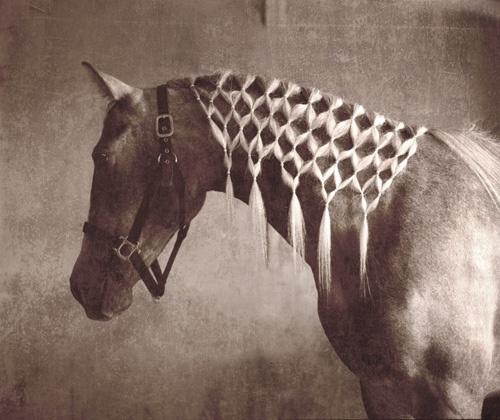 The Palomino Pony Braiding Manes And Tales