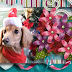 DSB  I Love Dachshunds -FB cover-