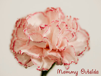 make colored carnations