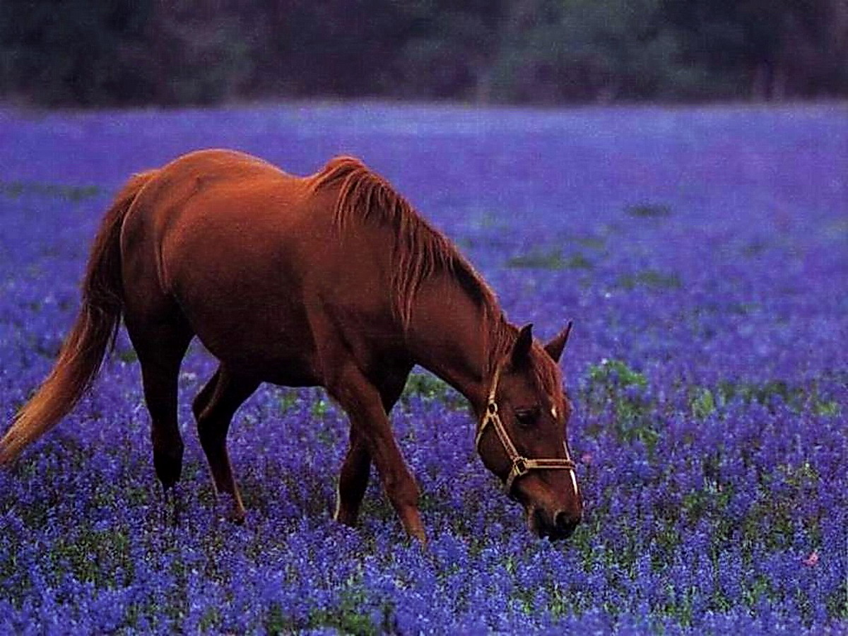 Фото вороных лошадей с цветами