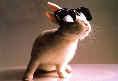 Bunny celebrity