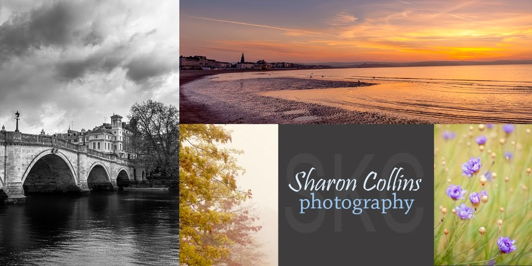 Sharon Collins Photography {SKC Photos}