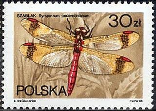 Sello polaco de una Sympetrum pedemontanum