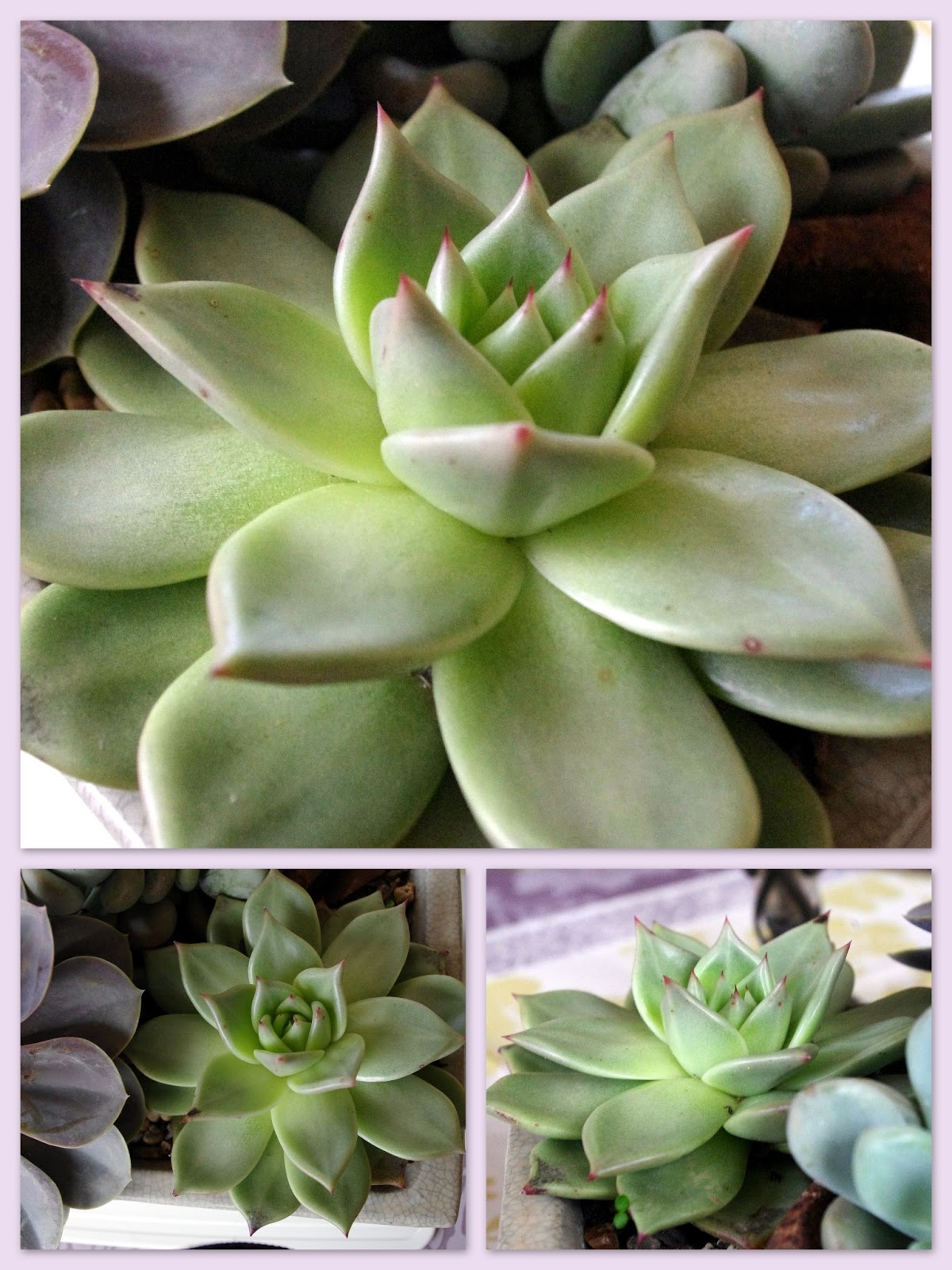 Plantes succulentes photos latest blog dco design joli place with plantes succulentes photos - Plante succulente entretien ...
