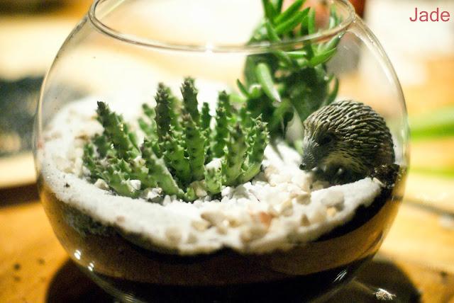 jade from paris easy diy fabriquer son propre terrarium. Black Bedroom Furniture Sets. Home Design Ideas