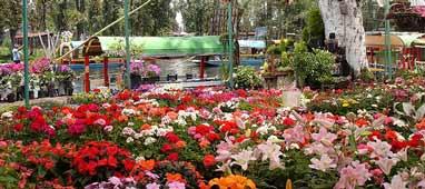 El portal de susana los jardines flotantes de xochimilco relax cerca de m xico df for Jardin xochimilco
