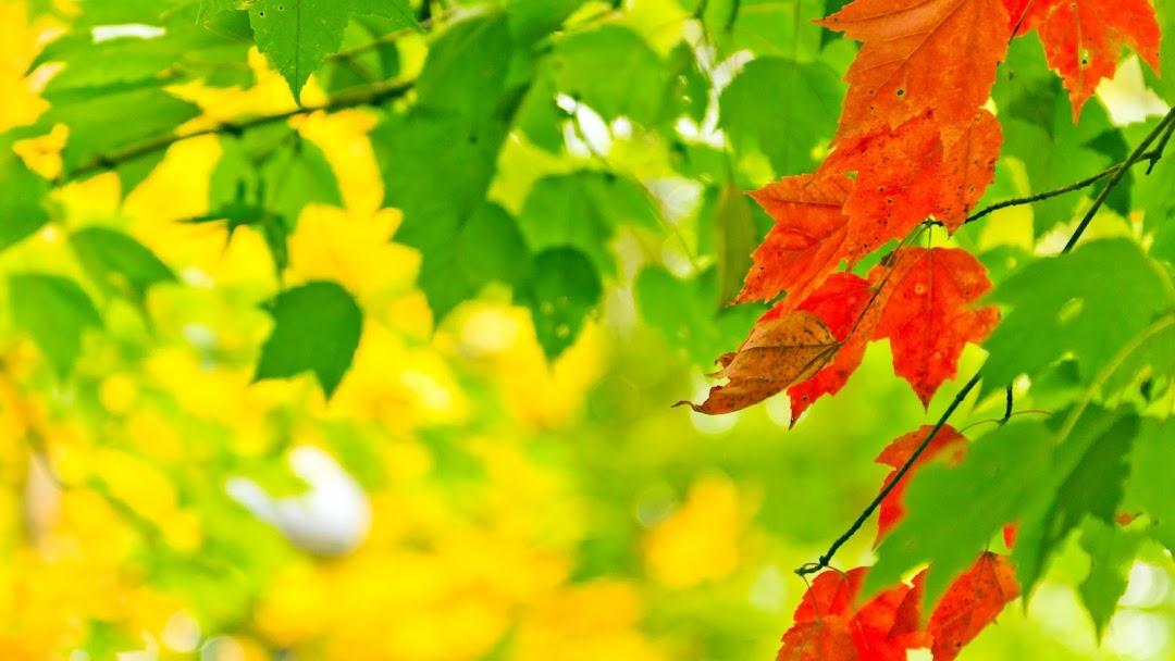 Leaves Macro HD Wallpaper 9