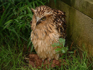 buffy fish owl facts, cara menjinakkan buffy fish owl, buffy fish owl pasir ris, buffy fish owl singapore, cara menjinakan buffy fish owl, buffy fish owl 550rb pre order, buffy fish owl harga, buffy fish owl diet, penjual buffy fish owl surabaya, buffy fish owl call, buffy fish owl dijual, harga pasaran buffy fish owl, buffy fish owl habitat, buffy fish owl dilindungi, perawatan buffy fish owl, buffy fish owl surabaya, jual buffy fish owl di jakarta, perbedaan buffy fish owl jantan dan betina, buffy fish owl brancher, download suara buffy fish owl, cara perawatan buffy fish owl, buffy fish owl indonesia, perbedaan buffy fish owl jantan dan betina, buffy fish owl pasir ris, buffy fish owl wiki, buffy fish owl facts, buffy fish owl singapore, buffy fish owl male, buffy fish owl female, buffy fish owl sound, buffy fish owl facts, buffy fish owl food, buffy fish owl surabaya, buffy fish owl singapore, fakta buffy fish owl, buffy fish owl size, buffy fish owl harga, buffy fish owl harga, penjual buffy fish owl surabaya, buffy fish owl call, buffy fish owl habitat, download suara buffy fish owl, buffy fish owl, harga buffy fish owl chick, suara buffy fish owl, buffy fish owl habitat, harga buffy fish owl juve, sifat buffy fish owl, buffy fish owl surabaya, burung hantu buffy fish owl, buffy fish owl training, buffy fish owl brancher, harga anakan buffy fish owl, the buffy fish owl, buffy fish owl indonesia, harga burung buffy fish owl, facts about the buffy fish owl, buffy fish owl wiki, harga pasaran buffy fish owl, tentang buffy fish owl, buffy fish owl adalah, makanan burung hantu buffy fish owl, umur buffy fish owl, jual buffy fish owl anakan, harga jual buffy fish owl, usia buffy fish owl, harga anakan buffy fish owl, buffy fish owl indonesia, makanan untuk buffy fish owl, facts about the buffy fish owl, buffy fish owl info, buffy fish owl wiki, buffy fish owl brancher, buffy fish owl jantan, wts buffy fish owl, buffy fish owl baby, harga buffy fish owl juve, wtb buffy fish owl, jual buffy fish owl brancher, jual buffy fish owl, jual buffy fish owl 2013, jual buffy fish owl banten, jual buffy fish owl jakarta, jual buffy fish owl 2014, burung buffy fish owl, jual buffy fish owl chick, buffy fish owl 550rb pre order, burung hantu buffy fish owl, jual buffy fish owl brancher, owl nest fish fry, jual baby buffy fish owl, jual buffy fish owl banten, owl nest fish camp, harga burung buffy fish owl, jual buffy fish owl anakan, fish owl of eurasia, jual buffy fish owl bandung, jual buffy fish owl di jakarta, blakiston's fish owl of eurasia, beli buffy fish owl, jual baby buffy fish owl, blakiston's fish owl origami, buffy fish owl, buffy fish owl kaskus, brown fish owl oymapinar, buffy fish owl facts, karakter buffy fish owl, fish owl pictures, buffy fish owl singapore, keistimewaan buffy fish owl, fish owl pasir ris, buffy fish owl harga, kebiasaan buffy fish owl, fish owl pics, buffy fish owl call, buffy fish owl lifespan, blakiston fish owl pictures, buffy fish owl surabaya, buffy fish owl male, buffy fish owl pasir ris, buffy fish owl habitat, buffy fish owl murah, pels fish owl, buffy fish owl indonesia, makanan buffy fish owl, puffer fish owl, buffy fish owl brancher, melatih buffy fish owl, fish and owl creek permit, buffy fish owl wiki, cara memelihara buffy fish owl, buffy fish owl 550rb pre order, buffy fish owl call, jual buffy fish owl murah, blakiston's fish owl paper, buffy fish owl chick, merawat buffy fish owl, moki fish owl review, harga buffy fish owl chick, makanan untuk buffy fish owl, blakiston's fish owl range, cara melatih buffy fish owl, cara menjinakkan buffy fish owl, fish owl pasir ris, cara memelihara buffy fish owl, makanan burung hantu buffy fish owl, moki blakiston's fish owl review, cara perawatan buffy fish owl, buffy fish owl 550rb pre order, russian fish owl,