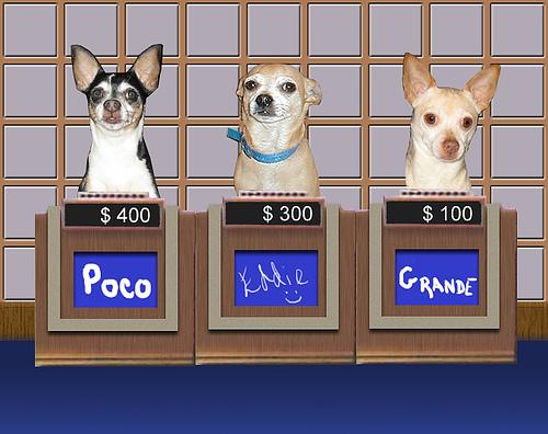 Résultats de recherche d'images pour «dogs playing jeopardy»
