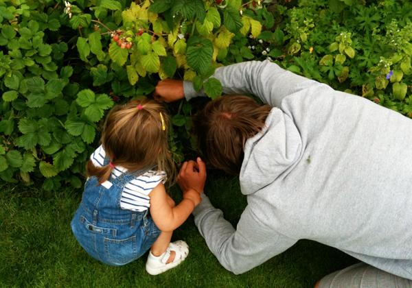 En flicka plockar hallon med sin pappa
