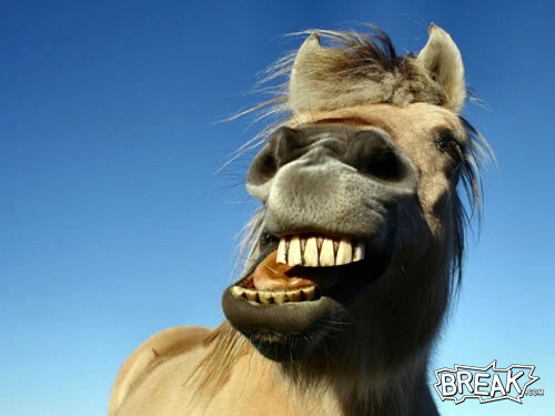 Funny Horse | Face | Funny And Cute Animals