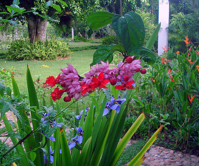 flores tropicais jardim : flores tropicais jardim: