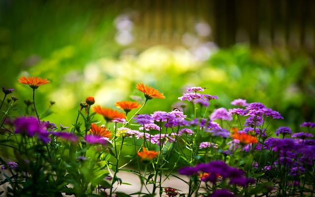 Hình ảnh hoa đẹp 13