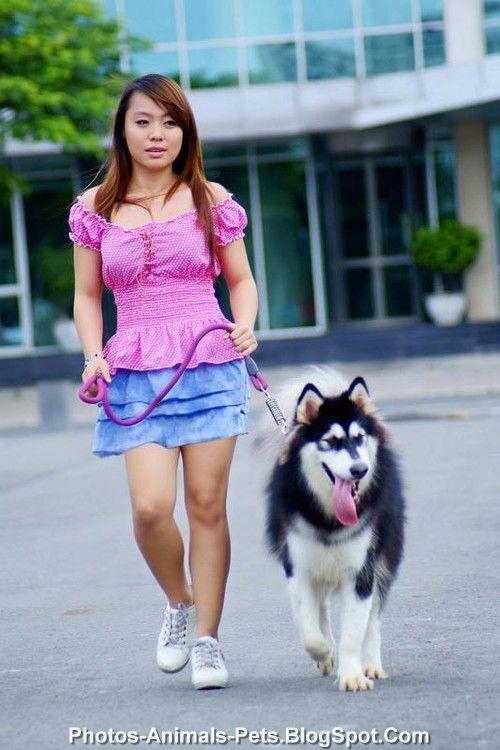 http://2.bp.blogspot.com/-35EuD1R9QiE/TplfvifMmQI/AAAAAAAACC4/_8J-lVotz3k/s1600/Husky%2Bdog_2012.jpg